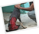 Street Dog Injuries