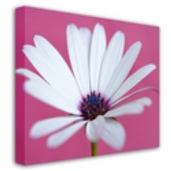 service provider of canvas printing in delhi poster printing by ad