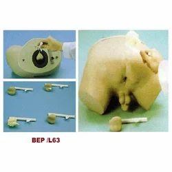 Prostate Inspection Model ( BEPD/L63 )