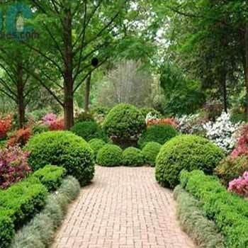 Land Scape And Garden Treatment