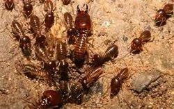 Termite Control Treatments
