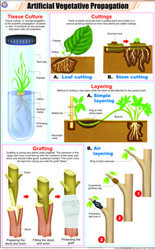 Artificial Vegetative Propagation For Botany Chart