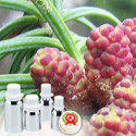 Fir Balsam Absolute Oil