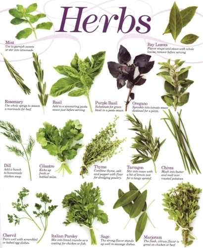 Herbs By Common Name - List of Herbals - 1A Exporter & Wholesaler ...