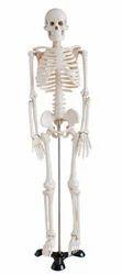 Mini Skeleton ( BEP-046 )
