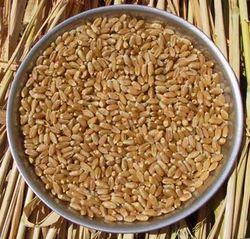 Hybrid Wheat