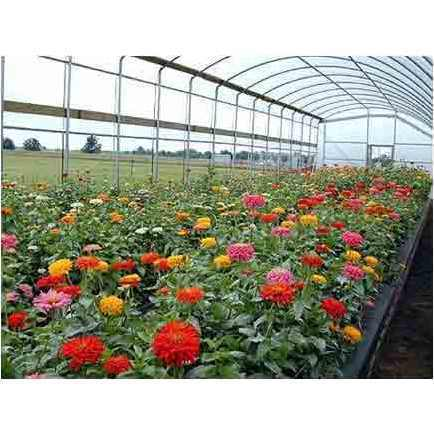 Flower Nursery Services