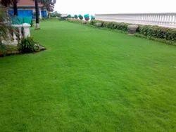 Luxurious  lawn installation