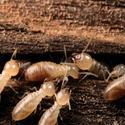 Commercial Termite Control Services, Nashik, Pune And Nashik