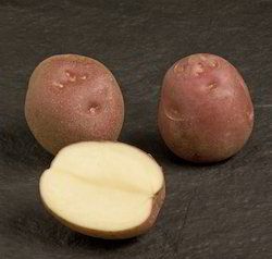 Lady Rosetta Potatoes Or Red Potatoes