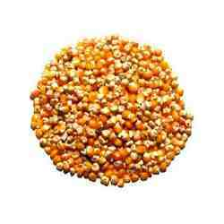 Dry Corn Seeds