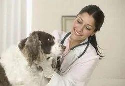Veterinary Treatment Clinic
