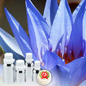 Lotus Blue Absolute Oil