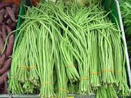 Long Beans ( Lubia )