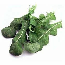 Lettuce Roguett Vegetables