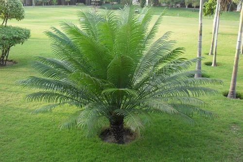 Home Gardens Nursery, Jaipur , Retailer of Garden plants and