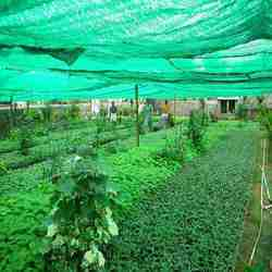 Raksha green Shade Net
