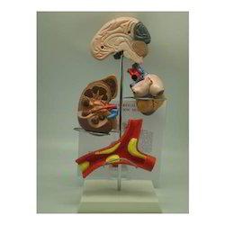 Vertical Hypertension Model